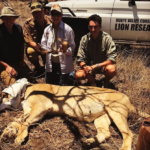 Big Game Conservation Issues: Poaching as A Business, Safari Outfits Handing Concessions Back to Governments, Successful Lion Reintroduction and Much More with Ivan Carter