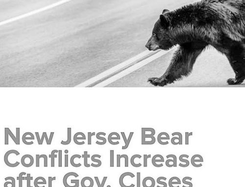 New Jersey Governor Ignores Wildlife Officials, Bans Black Bear Hunting on State Land & New Product That Keeps Raccoons Off Deer Feeders
