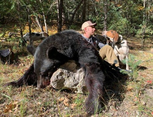 Bears, Grouse & Trout- Epic New Mexico Adventure In The Books