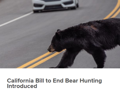 California Inches Closer to Banning All Hunting, Biden's Flurry of Executive Orders Impact on Hunting & Conservation and Unplugging our Shotguns For Late Season Snows