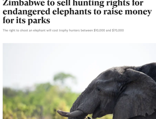 Campfire Conversations 14: SCI's Ben Cassidy On Anti Hunting Legislation Advancing Out of Congress, Zimbabwe To Sell Elephant Hunts to Fund Conservation and Much More